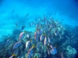 Herd Of Fish