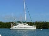 Cat Tales In Key West