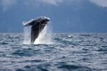 Whale Air