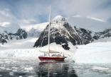Icebird In Paradise Hbr Antarctica