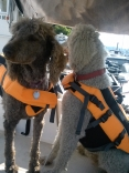 Tess And Daisey On Seafever