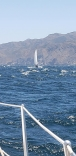 Channel Islands, Windy Lane