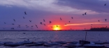 Sunset And Seagulls, Lake Lewisville, Texas