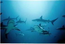 Love Them Sharks