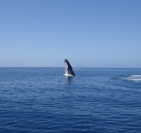 Whale Playing Around