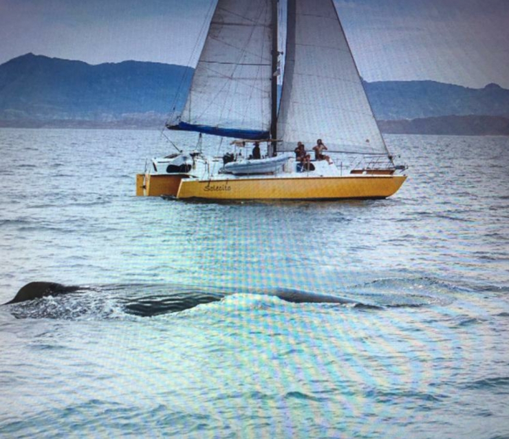 Solecito Passing Sperm Whale