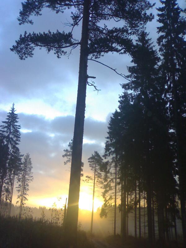 Sunrise Through The Trees, Finland