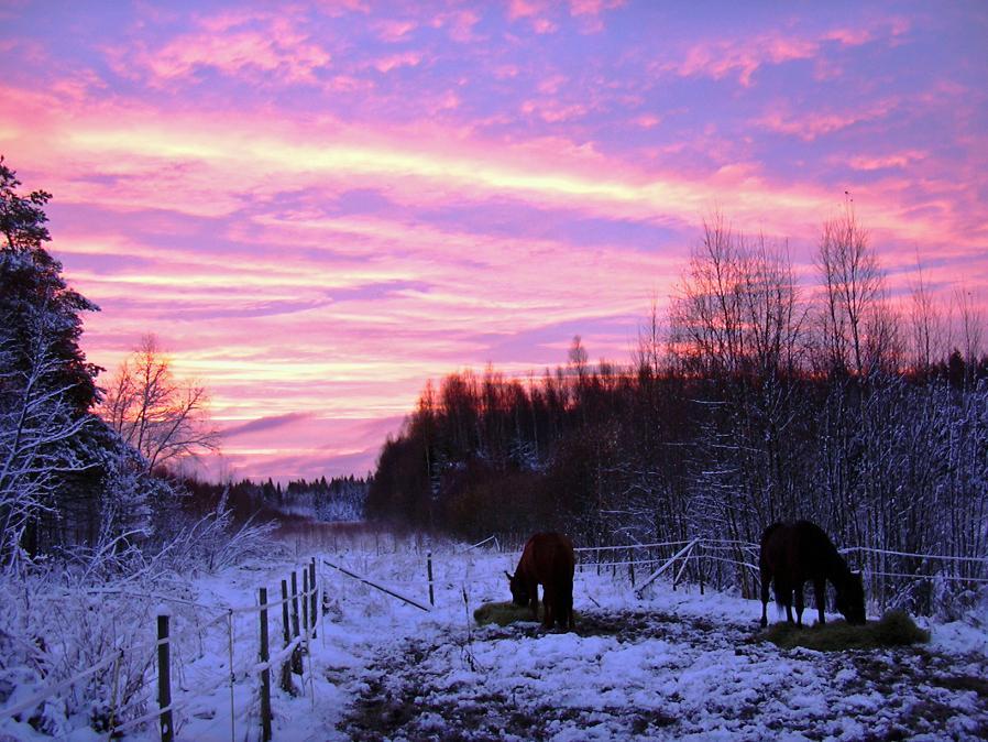 Horses In A Sunrise...