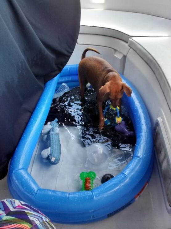 Kiddie Pool Not Just For Kids