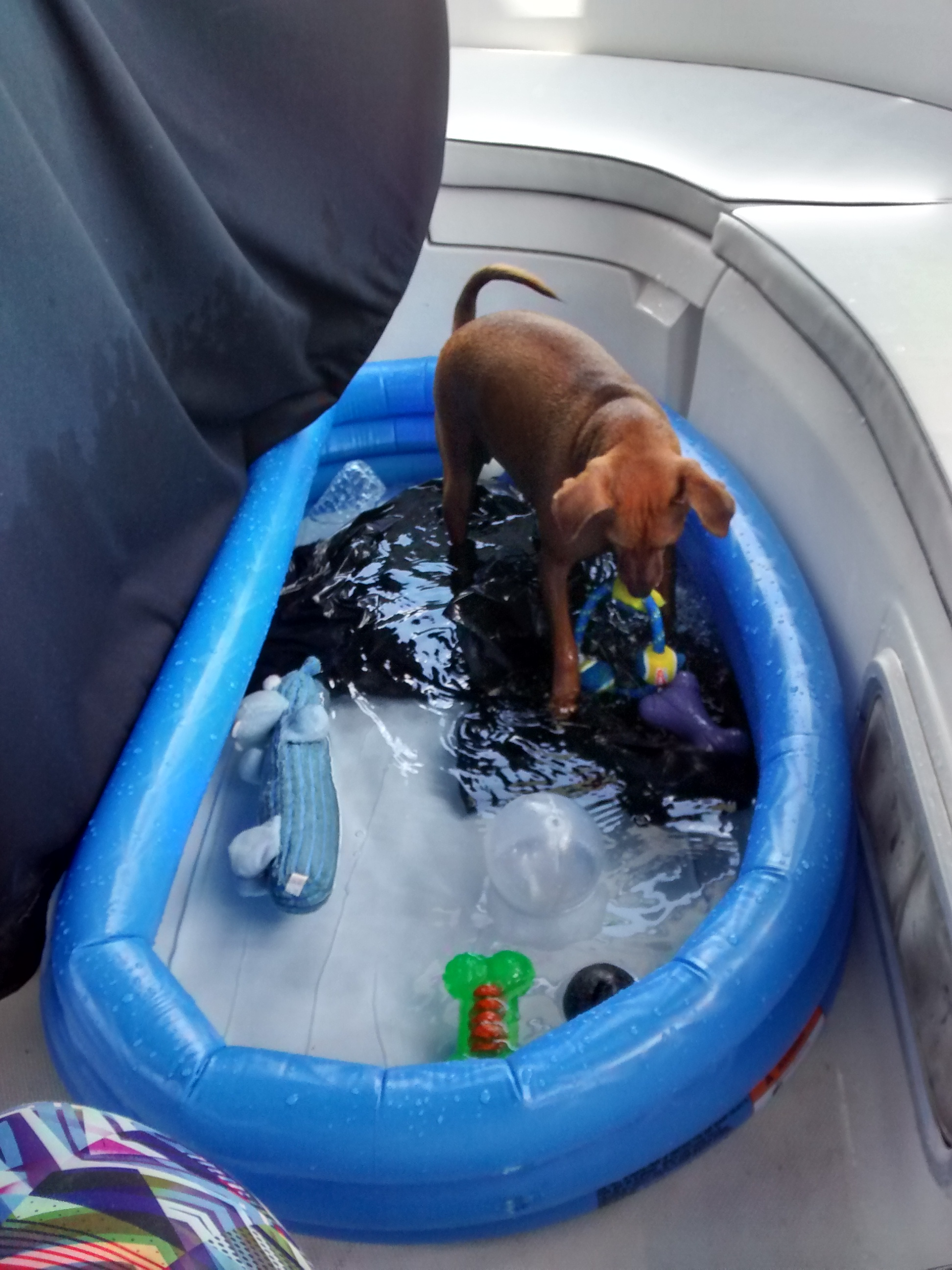 Kiddie Pool Not Just For Kids