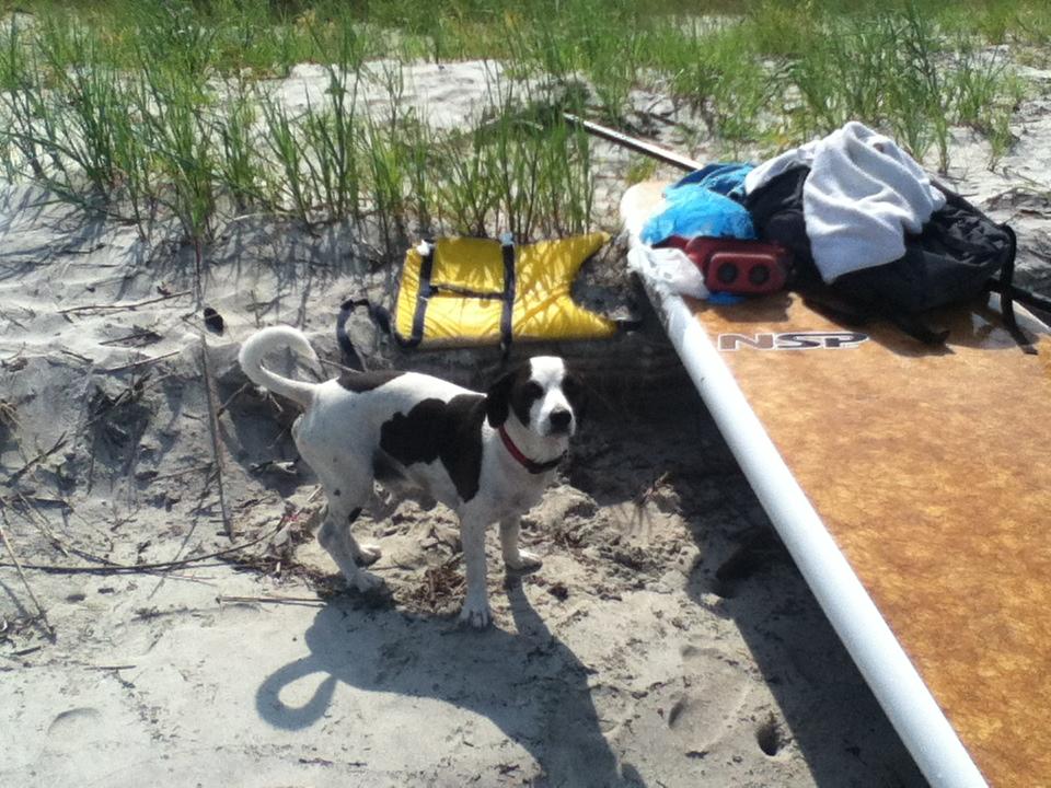 A Dog Gotta Surf Too