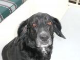 Our Dog Tivo