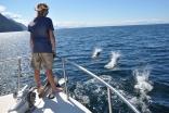 Dall's Porpoises, Stephens Passage