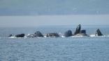 Humpbacks, Cape Fanshaw