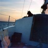 Sunset Sailing Cat