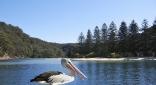 Coasters Retreat. Pittwater, Australia