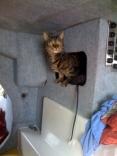 Kittyinspection