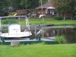 dock bird