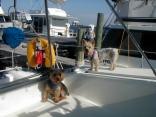 guard dogs on board