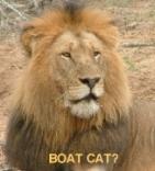 BOAT CAT?