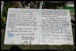 Bombas Law - BVI