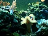 Not Nemo
