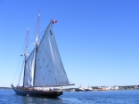 Bluenose Sailling Into Georgetown, Pei