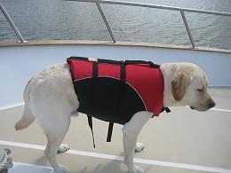 Click image for larger version  Name:Life vest.jpg Views:149 Size:219.9 KB ID:101182