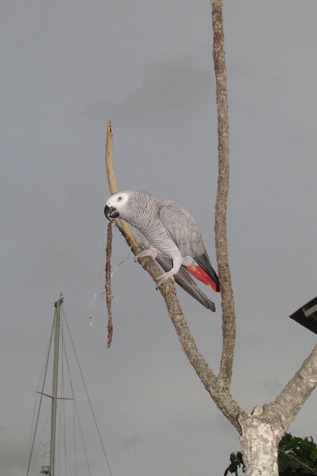 Click image for larger version  Name:Parrot.jpg Views:55 Size:41.5 KB ID:103092