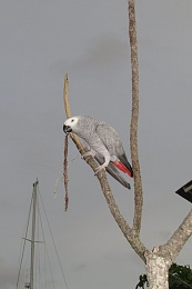 Click image for larger version  Name:Parrot.jpg Views:74 Size:41.5 KB ID:103092