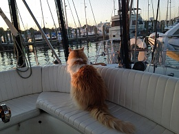 Click image for larger version  Name:boat August 2015 034.jpg Views:211 Size:411.7 KB ID:107313