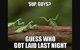 Click image for larger version  Name:guess who got laid last night.jpg Views:367 Size:33.5 KB ID:108960
