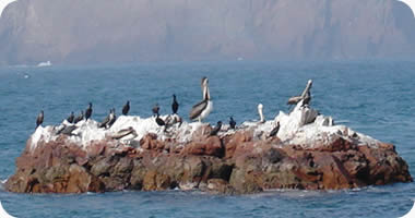 Click image for larger version  Name:paracas-birds-guano.jpg Views:97 Size:14.2 KB ID:109206