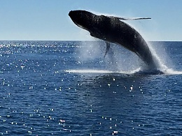 Click image for larger version  Name:whale1.jpg Views:126 Size:78.7 KB ID:110059