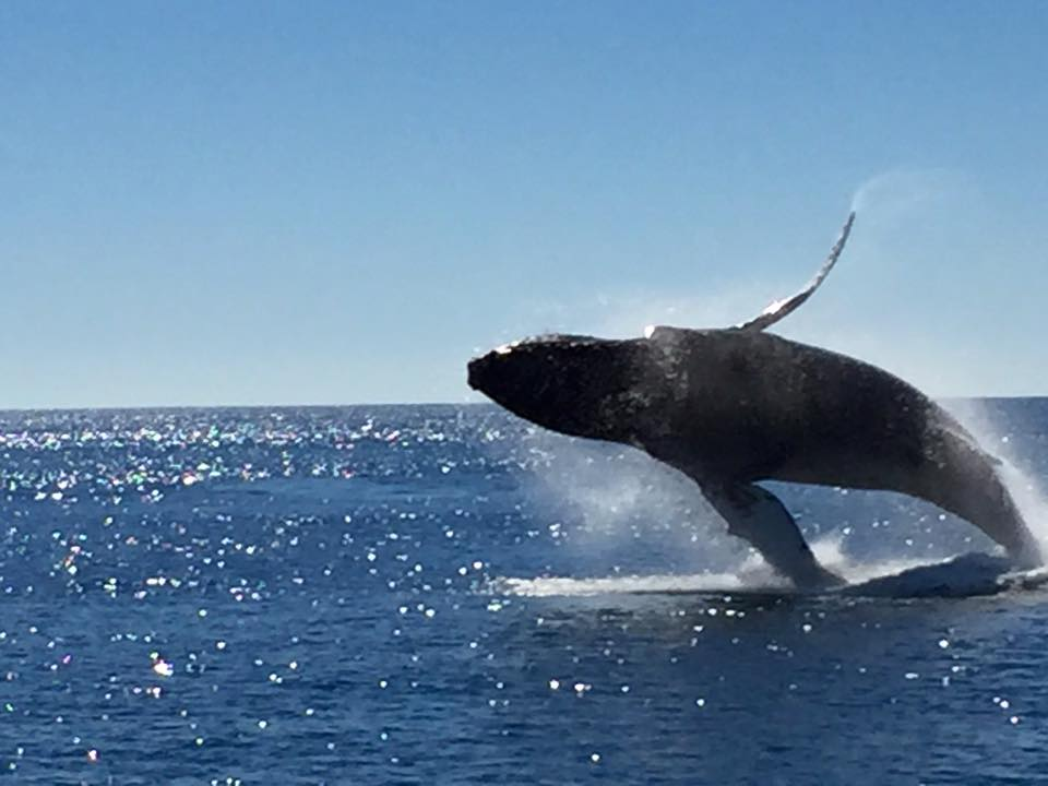 Click image for larger version  Name:whale2.jpg Views:100 Size:54.5 KB ID:110060
