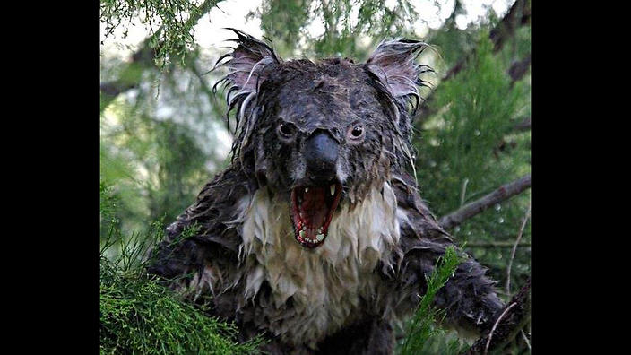 Click image for larger version  Name:drop_bear.jpg Views:91 Size:74.3 KB ID:110634