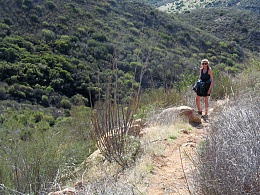Click image for larger version  Name:Espinosa Trail Five.jpg Views:89 Size:447.4 KB ID:110940