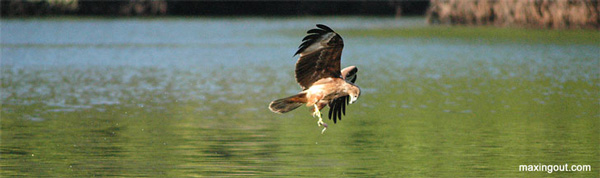 Click image for larger version  Name:Hole-in-Wall-Eagle.jpg Views:168 Size:42.9 KB ID:1123