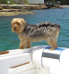 Click image for larger version  Name:monty back of searay.jpg Views:434 Size:84.0 KB ID:114764