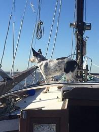 Click image for larger version  Name:ImageUploadedByCruisers Sailing Forum1451415950.746609.jpg Views:273 Size:46.7 KB ID:115799