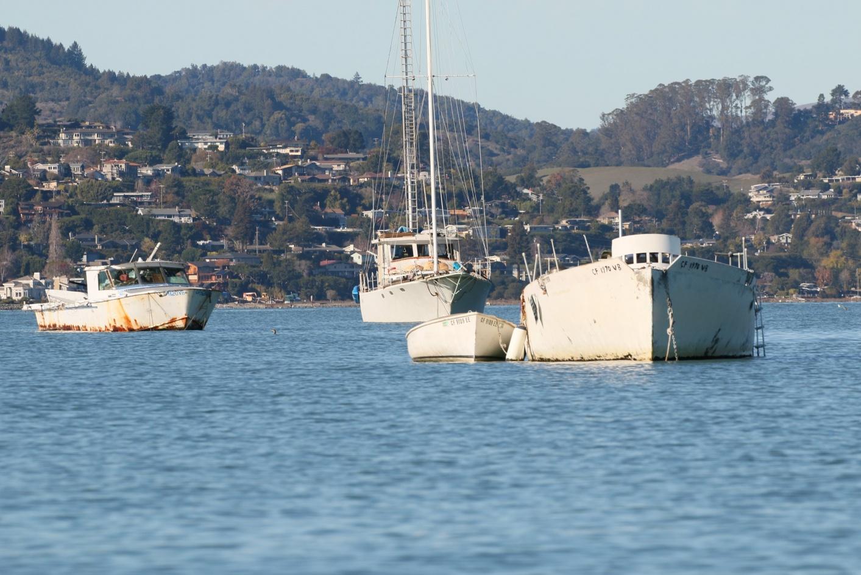 Click image for larger version  Name:Richardson Bay 123115 8.jpg Views:52 Size:420.0 KB ID:116508