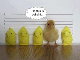 Click image for larger version  Name:peeps lineup.jpeg Views:243 Size:40.6 KB ID:119918