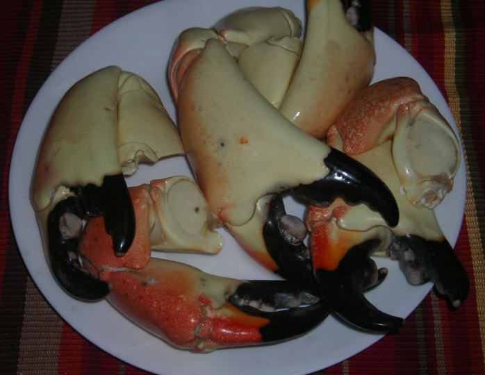 Click image for larger version  Name:Stone Crab12.24.09.jpg Views:78 Size:55.0 KB ID:12075