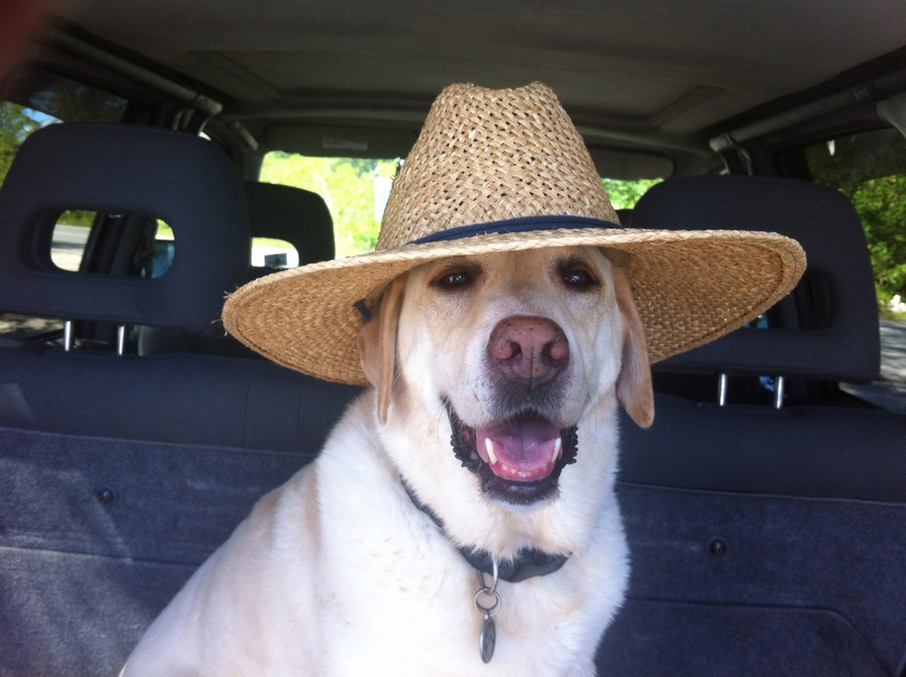 Click image for larger version  Name:Syd's hat.jpg Views:76 Size:289.4 KB ID:125038