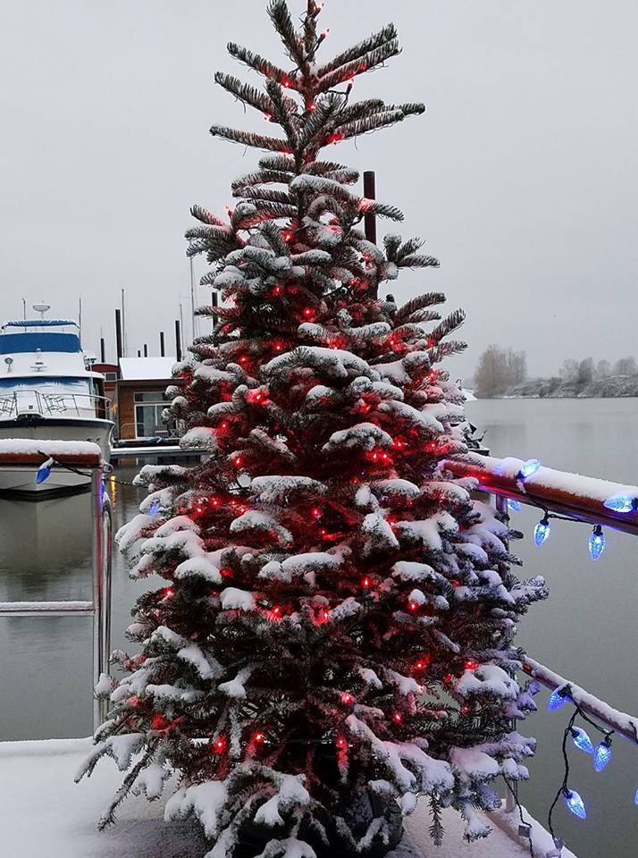 Click image for larger version  Name:Tree on boat.jpg Views:410 Size:118.0 KB ID:138399