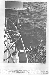 Click image for larger version  Name:Searunnerwindwave.jpg Views:476 Size:70.0 KB ID:1475