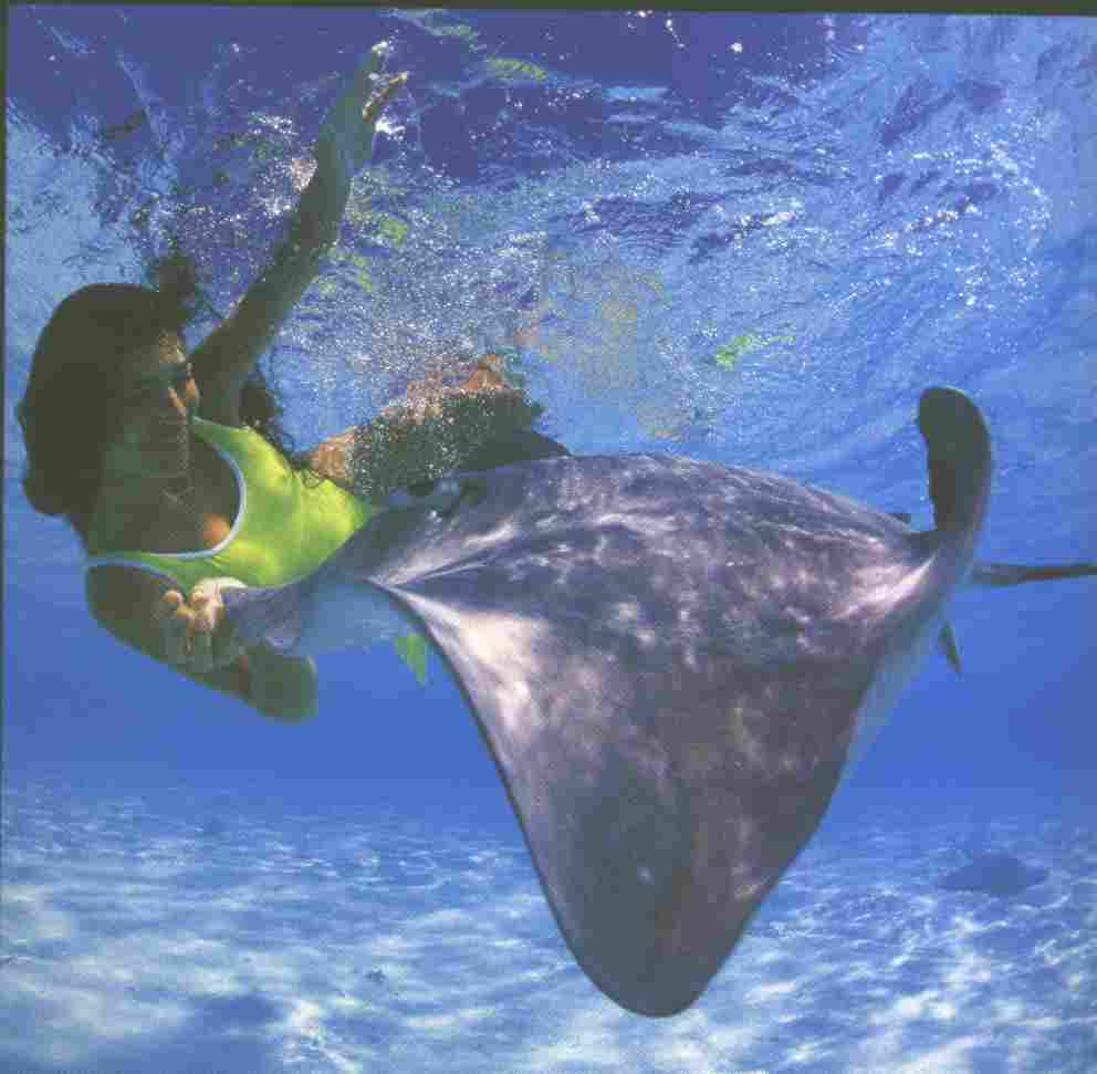 Click image for larger version  Name:StingRay.JPG Views:125 Size:31.0 KB ID:16929