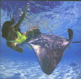 Click image for larger version  Name:StingRay.JPG Views:170 Size:31.0 KB ID:16929