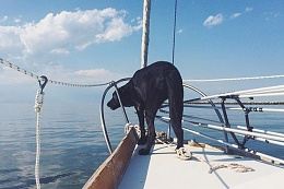 Click image for larger version  Name:Mitchell onboard (early Spring).jpg Views:68 Size:44.0 KB ID:169456