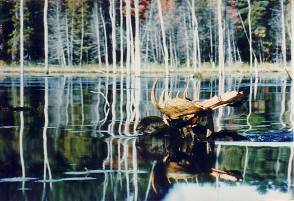 Click image for larger version  Name:MooseCrossingBeaverPond.jpg Views:85 Size:43.7 KB ID:17386